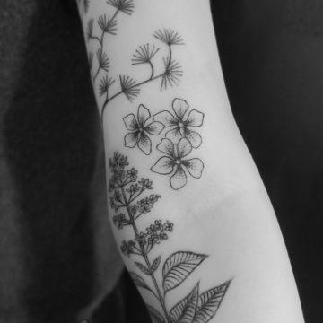 tattooherbier